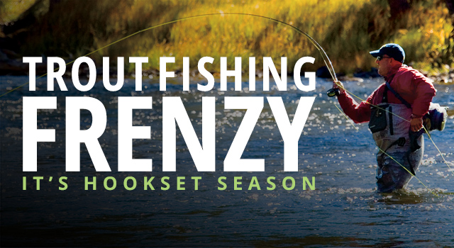 Trout Fishing Frenzy