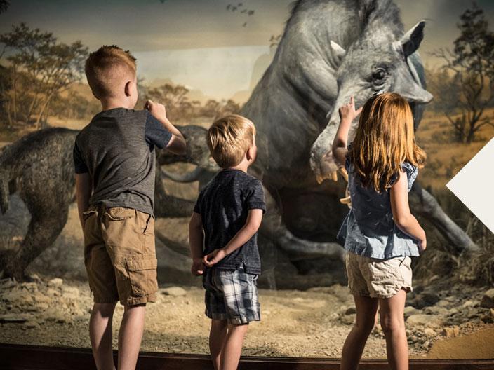 Ancient Ozarks Natural History Museum