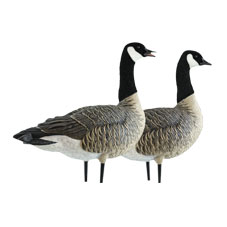 Avian-X AXP Full-Body Lesser Canada Goose Decoys