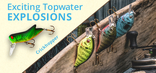 Exciting Topwater EXPLOSIONS - Crickhopper